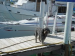 Leo on the dock at Sea Spray Marina, in front of 'Cloudy Bay'