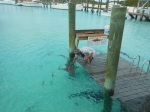 Randy patting the sharks at Compass Cay