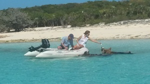 Feeding pigs from our dingy (taken by Emerald Lady)