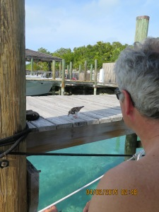 Randy's new pet on the dock at Highbourne Cay Marina