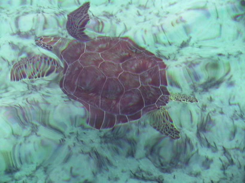 Turtle Edit